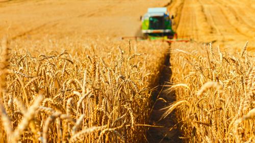 Tidspres i høsten øger risikoen for ulykker